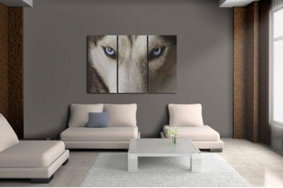 9 tipp, hogyan készítsünk fotót a kutyáról a vászonképhez